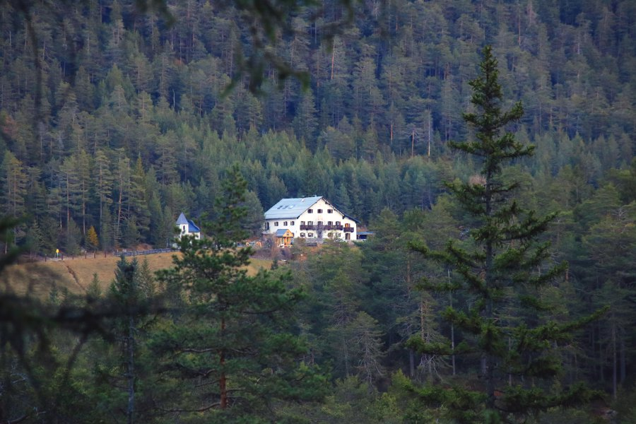 house austrian tirol in lush pine forest alpen retreat breathwork session